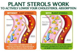 Plant sterols in Flora products actively lower your cholesterol.